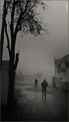 Mañanas de Nieblas. (GARFANKEL) Tags: