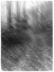 mystery road (GR167) Tags: mist monochrome blackandwhite bw impressionism iphoneography iphoneart woods dark ethereal