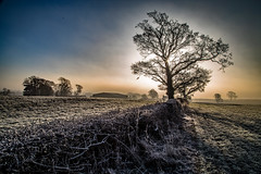 Hedgerow (Peter Leigh50) Tags: leicestershire landscape frost mist field