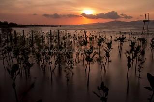 Kita adalah senja, waktu singkat dimana siang dan malam saling bertukar~ #sunset #senja #karangantu #serang #pantai #kotaserang #wisata #Banten #Indonesia . http://bit.ly/1BFtNAa