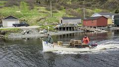 Lobster boat (tmeallen) Tags: lobsterboat fishermen harbour motoring wake fishing stage boatramp fishshack beach troutriver newfoundland fishingculture