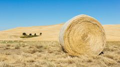 Between You and Me (John Westrock) Tags: landscape colton washington unitedstates us haybales rural farmfield bluesky clearsky pacificnorthwest canoneos5dmarkiii canonef2470mmf28lusm