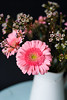 a lovely arrangement (Ginny Williams Photography) Tags: pink flowers daisy bouquet vase white