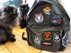 East-patch. (AGUILA81) Tags: persiancat persian guinness hobbes patches patch eastpak obey dudesfactory mcbess supakitch flyingfortress persians cat katze gato gatopersa chat chatpersan chats sac sacados custom ecussons