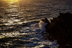 Arona de mar (juliosabinagolf.) Tags: nikon d3300 mar costa mediterráneo portman murcia