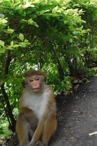 Monkey regards you