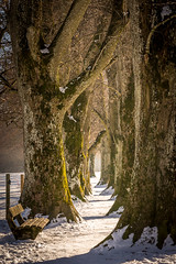 Winding path (hjuengst) Tags: holzkirchen path winding curved trees winter snow february sun bench fence steindlweg pathway