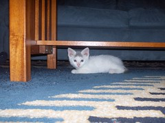 hpim0098 (joexner) Tags: june kitten edgar