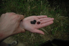 Sour Berries (DanSteingart) Tags: summer beachproject