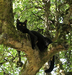 out on a limb (T Power) Tags: black tree up tag3 taggedout cat tag2 tag1