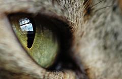 What she sees (debunix) Tags: macro reflection eye window up cat interesting emily close most views mostinteresting mostfavorited popular catseye favorited mostviewed cotcmostinteresting nikonstunninggallery