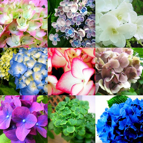 Hydrangeas are versatile fall wedding flowers They are available in a range