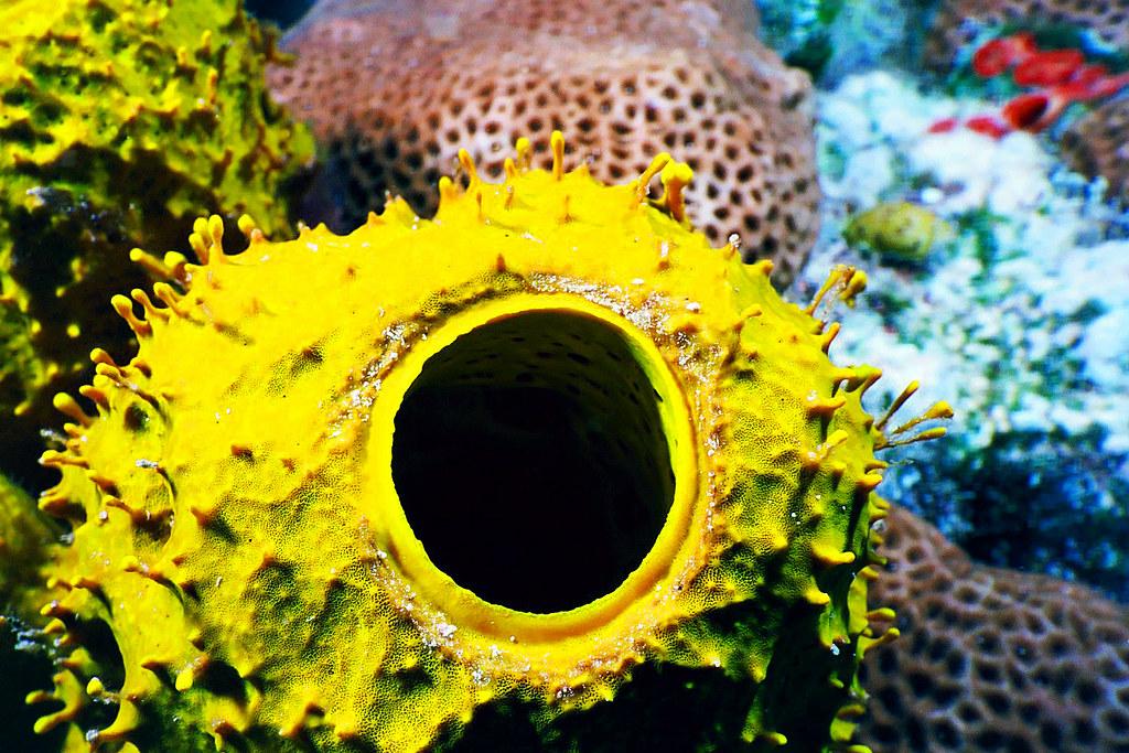 Aquacat 2004 Yellow sponge