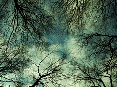 Tree Veins (alexkess) Tags: tree nature interesting gallery skies best portfolio 3ofakind naturelandscape cotcmostinteresting utatafeature artexperimental akc77 alexkess
