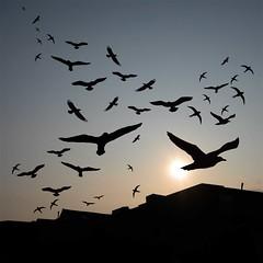 The Birds (Heaven`s Gate (John)) Tags: england beautiful birds silhouette sunrise wow geotagged ilovenature birmingham bravo 50
