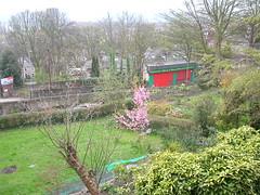 Sheffield centre garden in spring