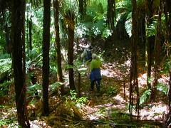 Sudarshanaloka bush walk 4