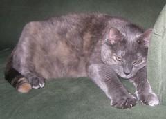 [My cat]