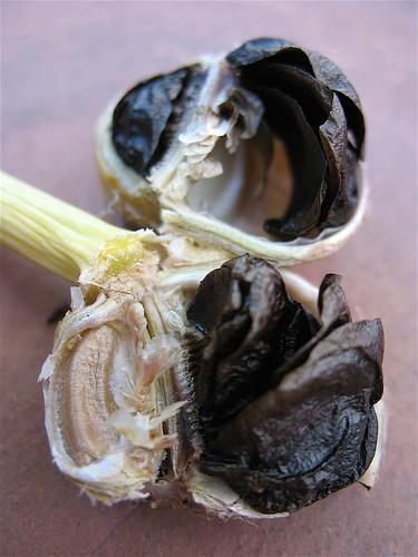 Amaryllis Seed Pod