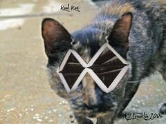 Kool Kat Sunglasses - by AJ Franklin