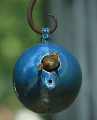 Bottle Bird #2 (House Wren) (William  Dalton) Tags: house birds ilovenature birdhouse wren housewren troglodytesaedon featheryfriday birdbottles abigfave colorphotoaward