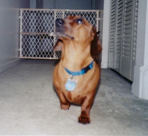 2001-Summer - Ralphie'MightyDog'