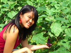 Touching a bush's eggplant (aisatsana) Tags: indonesia bandung sawah lampung