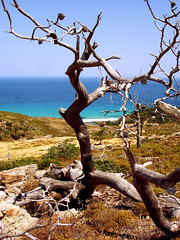Ikaria 271 (isl_gr (Mnesterophonia)) Tags: beach mediterranean hiking beautyconcealed ikaria icaria  aegean may trails greece forestfires wildfire ege  hikingikaria   messakti   theroundofrahesonfoot hikingdownfromthehills