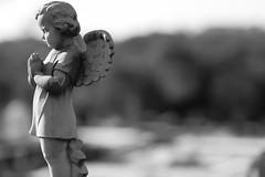 Angel (Ilford 100) (yinyang) Tags: bw d50 bokeh brisbane 85mmf18d bokehphotooftheday bokehsoniceaugust challenge04zen bokehsoniceaugust12 ccsalonremix