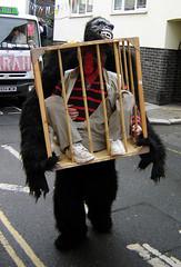 Carnival parade, Hastings (Fin Fahey) Tags: uk greatbritain carnival england geotagged sussex costume seaside europe gorilla unitedkingdom britain eu parade ape hastings southcoast eastsussex europeanunion seasideresort finfahey