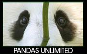 Pandas Unlimited