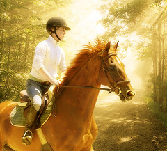 Last Golden Summer Rides (Isabelle Ann) Tags: horse art digital photoshop caballo cheval jumping bravo vermont photographer stadium quality digitalart photograph dorset isabelle jumper hunter cavallo cavalo pferd equine equus paard loh horseshows hunterjumper mostbeautiful manchestervt dorsetvt equineart vermontsummerfestival kkfav isabelleann isabelleanngreen equestrianart hunterjumpers dorsetsummerfestival equinephotographer hunterjumpershows artistichorse isabellegreen equitationart hunterjumperart dorsethorseshow hunterjumperphotography hunterjumprphotographer isabellegreenphotography isabelleannphotography isabelleannhorses mostbeautifulhorses equineartist hunterjumperphotographer hunterjumperphotograhy