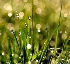 Happy sunny saturday (Truus) Tags: happy drops sunny achterhoek saterday truus abigfave
