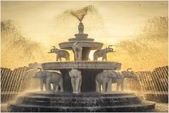 Elephant Fountain, People's Park, Yangon (Trains In Tasmania) Tags: myanmar yangon burma fountain elephant elephants water park peoplespark sunset latelighting