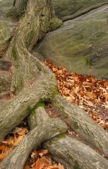 Roots on Rock