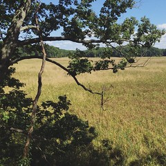 Mason Neck Wildlife Refuge, VA (p.bjork) Tags: statepark park nature virginia hiking marsh marshland