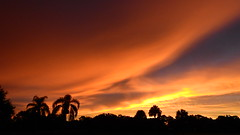 September 12th 2015 Sunrise (Jim Mullhaupt) Tags: pictures camera morning pink blue red wallpaper sky orange sun color tree weather silhouette yellow clouds sunrise landscape photography dawn photo nikon flickr florida snapshot picture palm exotic p900 tropical coolpix bradenton sunup nikoncoolpixp900 coolpixp900 nikonp900 jimmullhaupt