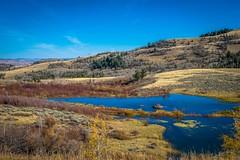 A beaver dam near Beaver Creek, WY.