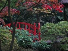 bruggetje in Japanse tuin (Gerard Stolk (vers L'Action de grâce)) Tags: herfst denhaag haag thehague bruggetje clingendael lahaye japansetuin