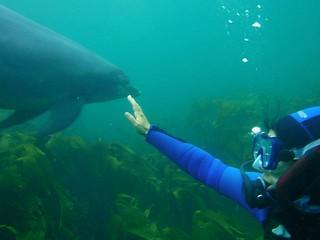 Dive Trip Dive Academy Ireland