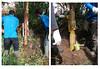 jasa-perbaikan-tiang-listrik-wilayah-sumatera-selatan-jambi-dan-bengkulu-lokasi-cabang-lahat (ramdhanijaya) Tags: tiang listrik perbaikan