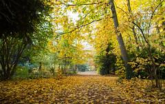 Automne (oncle_john) Tags: france tree fall automne canon lyon 5d arbre parc feuille mk3 ttedor mark3 5d3 onclejohn momentsdecapture