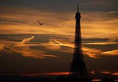 The Joy of Flight (trailrunner55) Tags: paris france bird silhouette eiffeltower