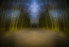 dreamscape III (ParadoX_Design) Tags: wood trees tree night forest bomen woods alone nightshot nacht running run boom dreams nightmare avond bang bos wald arbre baum fort reve droom donker seul alleen dromen traum alein alptraum freightened nachtmerrie