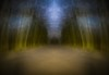 dreamscape III (http://www.paradoxdesign.nl) Tags: wood trees tree night forest bomen woods alone nightshot nacht running run boom dreams nightmare avond bang bos wald arbre baum forêt reve droom donker seul alleen dromen traum alein alptraum freightened nachtmerrie