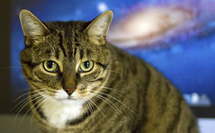 Chasing the Milky Way (Danny VB) Tags: mac imac osx macos ml milkyway dannyboy portrait box bokeh canon cats chat gato gatto tiger tigercat chattigre chattigré macosx107lion 107 lion 7d sigma 30mm14 30mm eyes look montreal quebec canada posing catposing