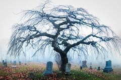 halloween tree (Matt Shiffler Photography) Tags: cemetery pennsylvania ruralpennsylvania tree lonetree fog mood moody mysterious somerset somersetcounty amishcountry tomb tombstones pennsylvaniahistory skeleton