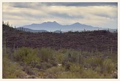 The Mountains Beyond (gauchocat) Tags: arizonasonoradesertmuseum tucsonarizona