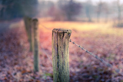Fence (RobMenting) Tags: 70d eos landscape heythuysen nature netherlands landschap leudal canon europe tree canoneos70d