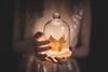 The Advent (Siréliss) Tags: christmas siréliss advent avènement couronne crown light lumière noël glass verre cloche hands mains